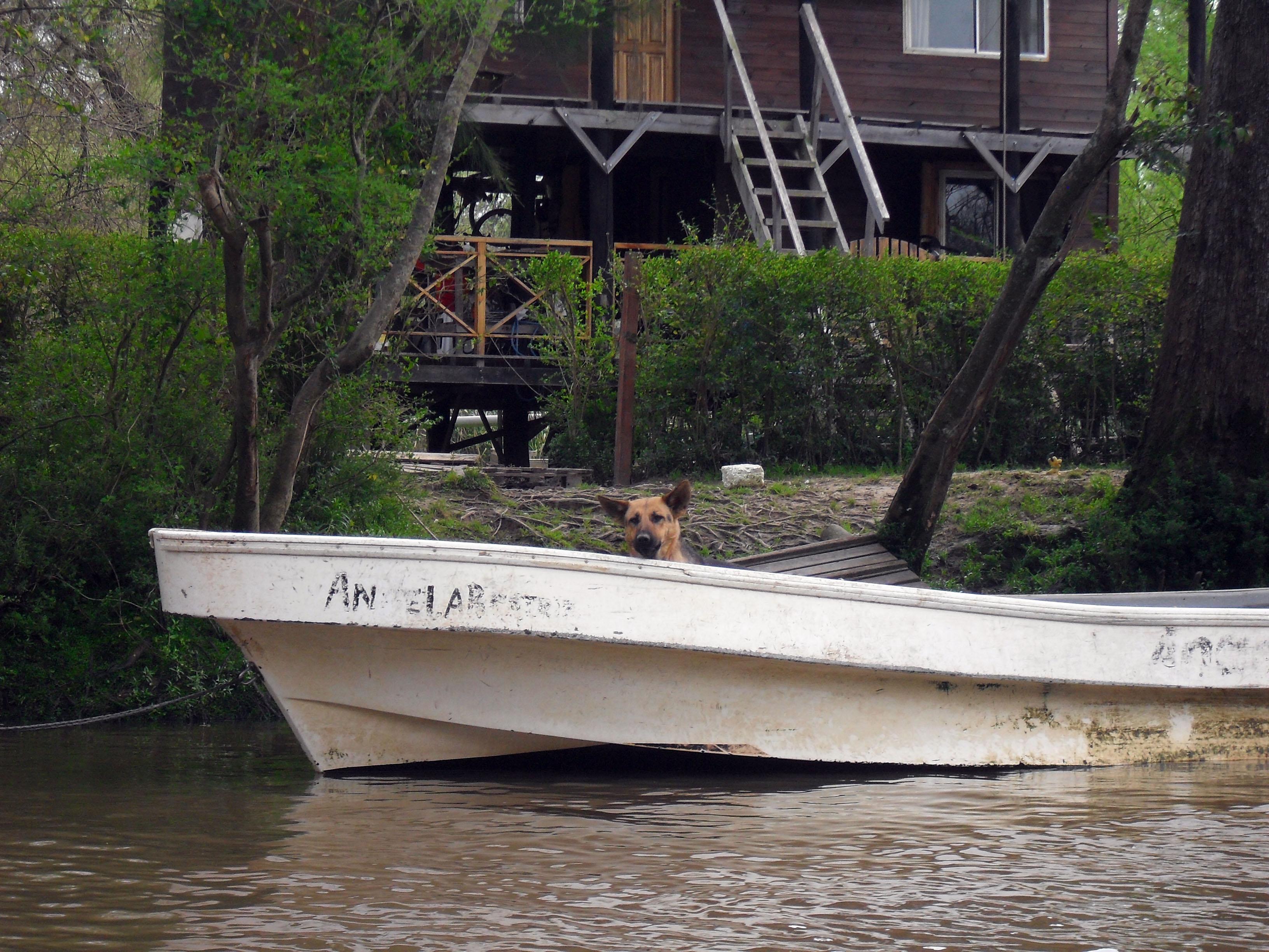 perro canoa